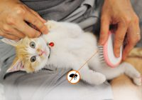 Remove Fleas On Your Kitty