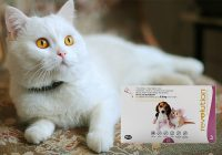 Revolution Treatment for Cats