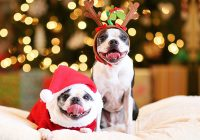 Dog Expressions During Christmas