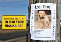 i-lost-my-dog