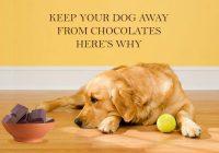 Chocolates-harmful-for-your-dog