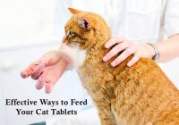 how-to-give-a-pill-to-cat