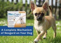 Complete-Mechanism-of-Nexgard-on-Dog