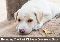 Lyme-Disease-In-Dogs