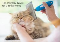 The Ultimate Guide for Cat Grooming