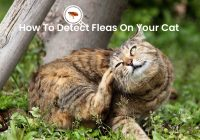 How to Detect Fleas on Your Cat