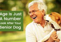 Old dog health tips