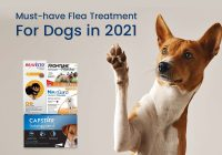 Flea Treatment for Dogs in 2021
