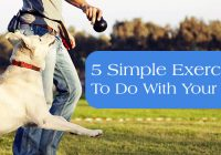 Simple Exercises to do with your dog