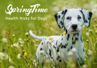 Springtime Health Risks for Dogs