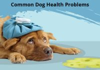 Common Health Problem in Dogs