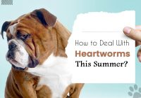 heartworms this summer
